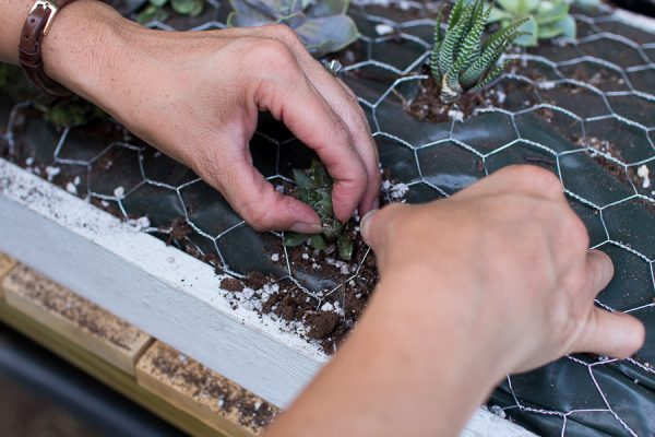 Step by Step Succulent Wall Hanging - bend chicken wire to hold succulents in place