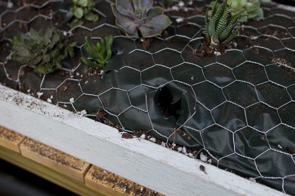 Step by Step Succulent Wall Hanging - cut chicken wire and bag