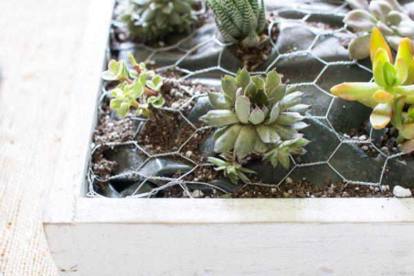 Pretty Farmhouse Succulents