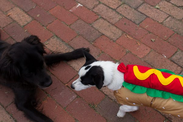 Even our dogs get into the Halloween spirit!