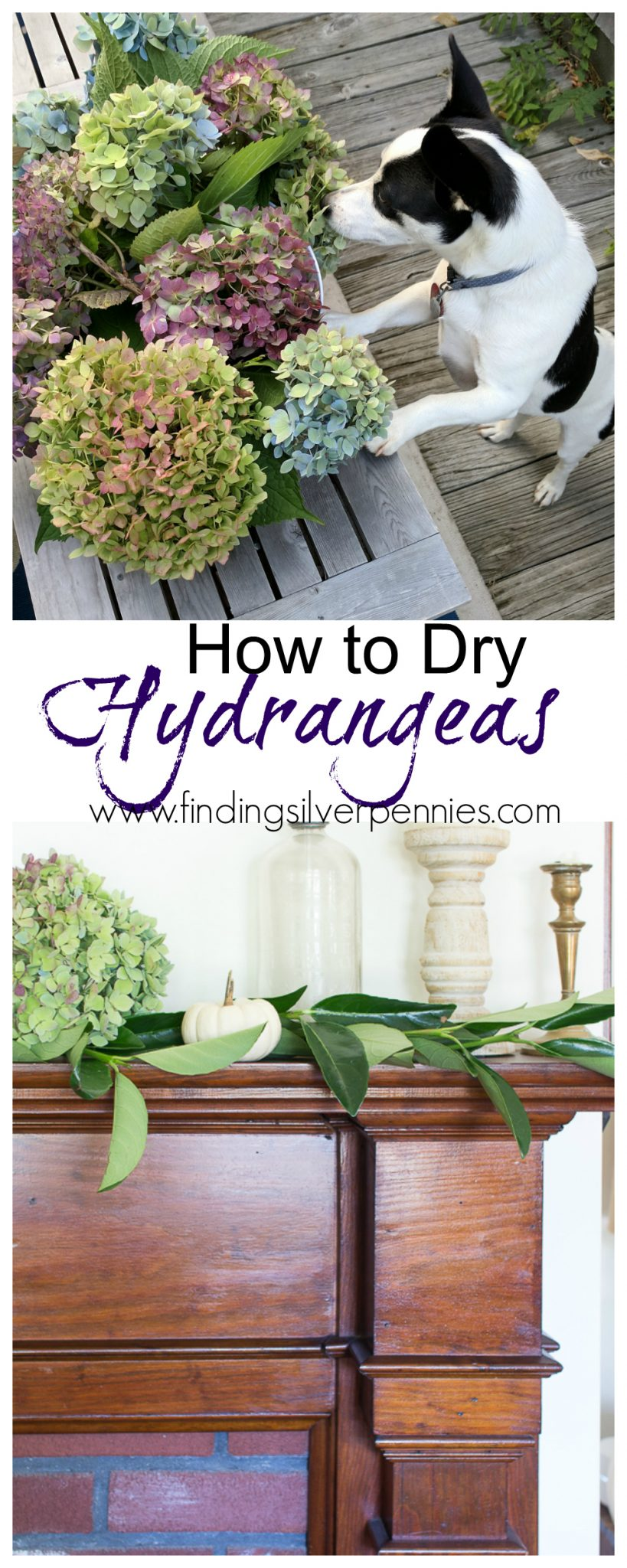 How to Dry Hydrangeas to use them in your home for decorating