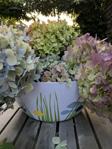 Preserve summer by drying hydrangeas