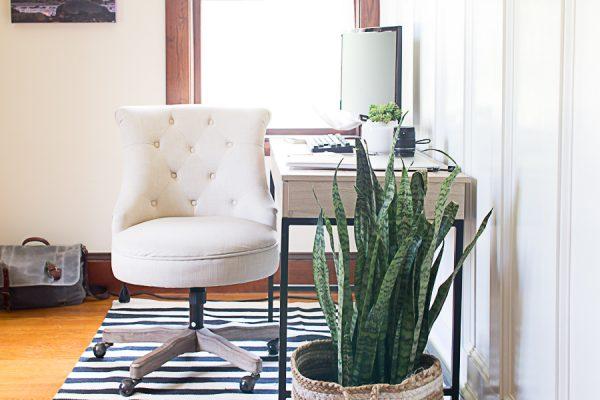 Coastal Style Office - Snake Plant Love
