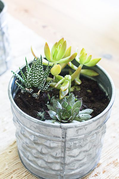 6 Ways to Add Greenery with Easy to Care For Plants