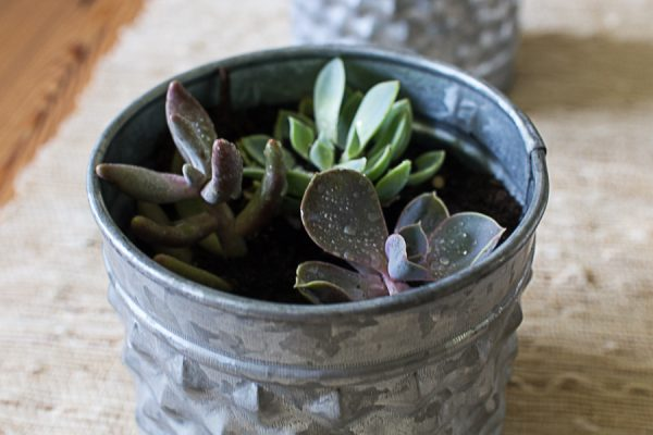 Farmhouse Style - succulents in galvanized containers