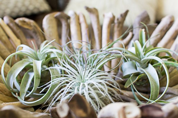 6 ways to add greenery with easy to care for plants for Easy plants to care for