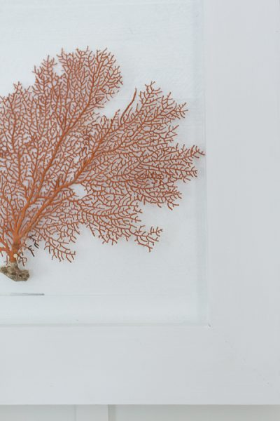 Delicate Sea Fans and painted shiplap