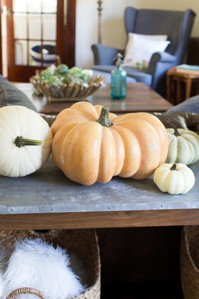 Assorted pumpkins for fall