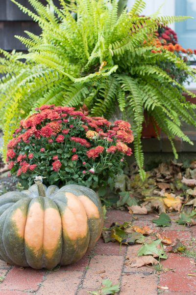 Mumms, Ferns and Heirloom Pumpkins
