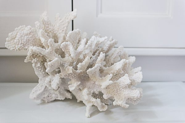 This faux coral is so realistic! I Finding Silver Pennies