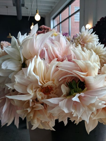 Pale Pink Dahlias I Finding Silver Pennies