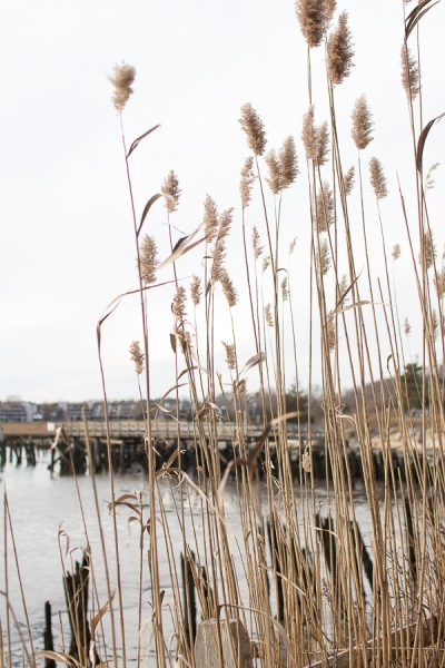 Gorgeous Marsh Views in Scituate - Finding Silver Pennies