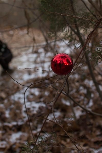 A Park in Scituate where the trees in nature are decorated for Christmas - Finding Silver Pennies