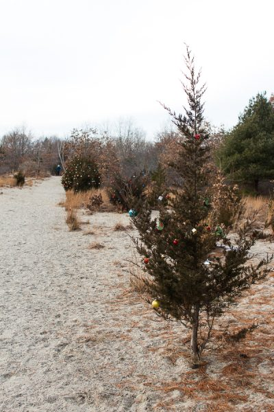 Stroll along these paths in Scituate and you'll come across trees decorated for the holiday - Finding Silver Pennies