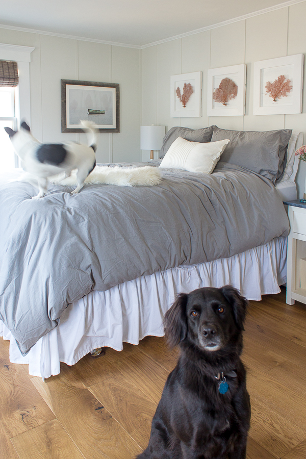 Our Two Dogs in the Bedroom I Finding Silver Pennies