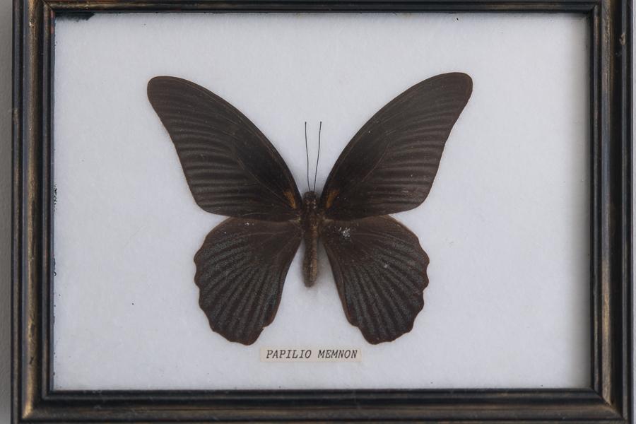 Vintage Butterflies - Finding Silver Pennies