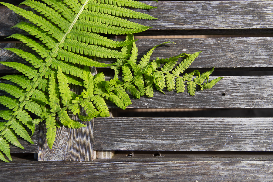 Ferns and Some Crafts - Finding Silver Pennies