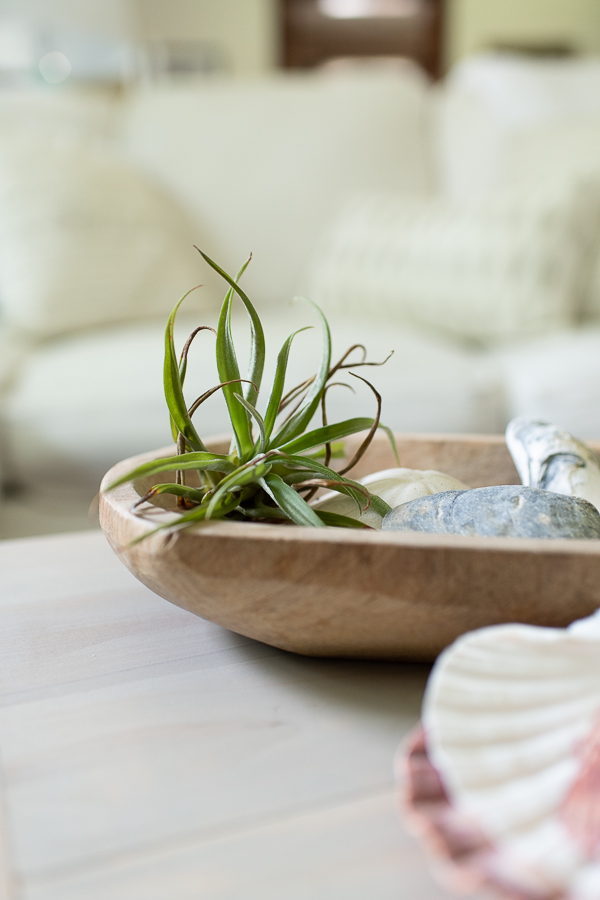 Airplants and shells in the living room - Finding Silver Pennies