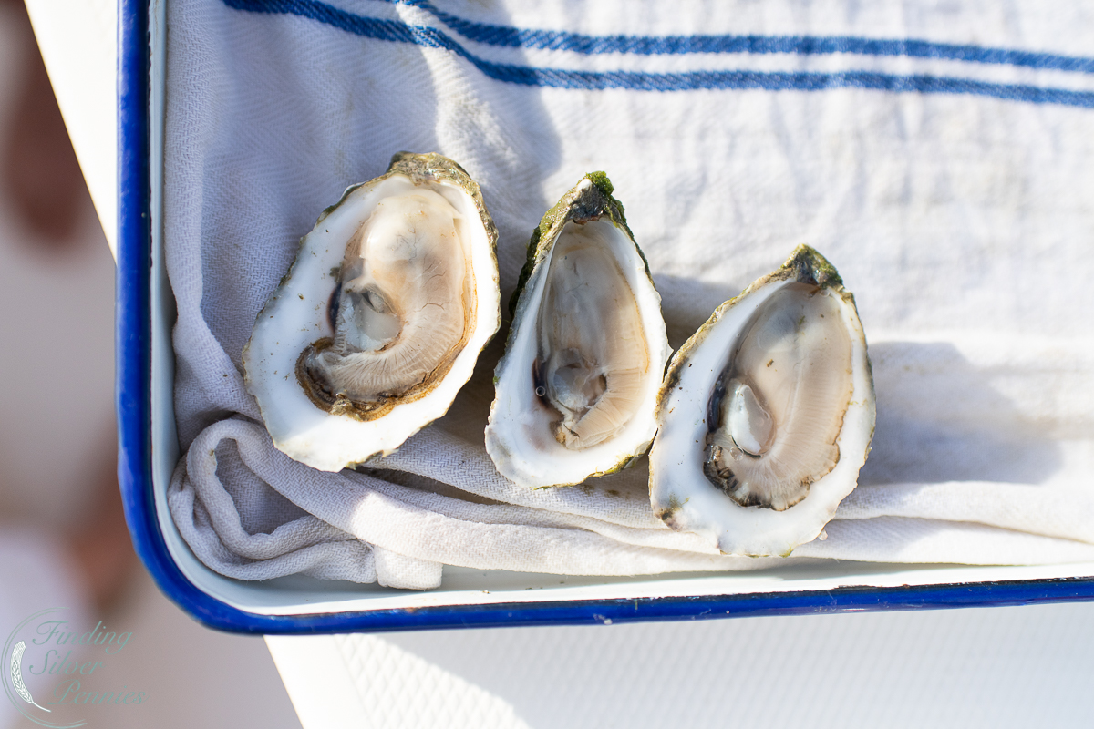 delicious oysters at Island Creek Oysters in Duxbury - Finding Silver Pennies