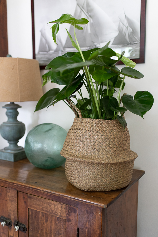 Sailboat Photograph and a Monstera Plant - Finding Silver Pennies