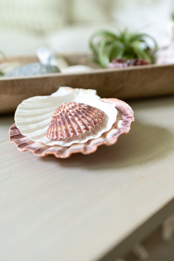 Pretty shells on a coffee table - Finding Silver Pennies