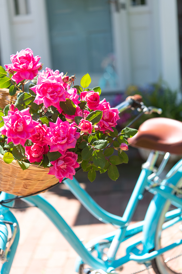 Gorgeous pink roses in a woven basket, retro bike - Finding Silver Pennies
