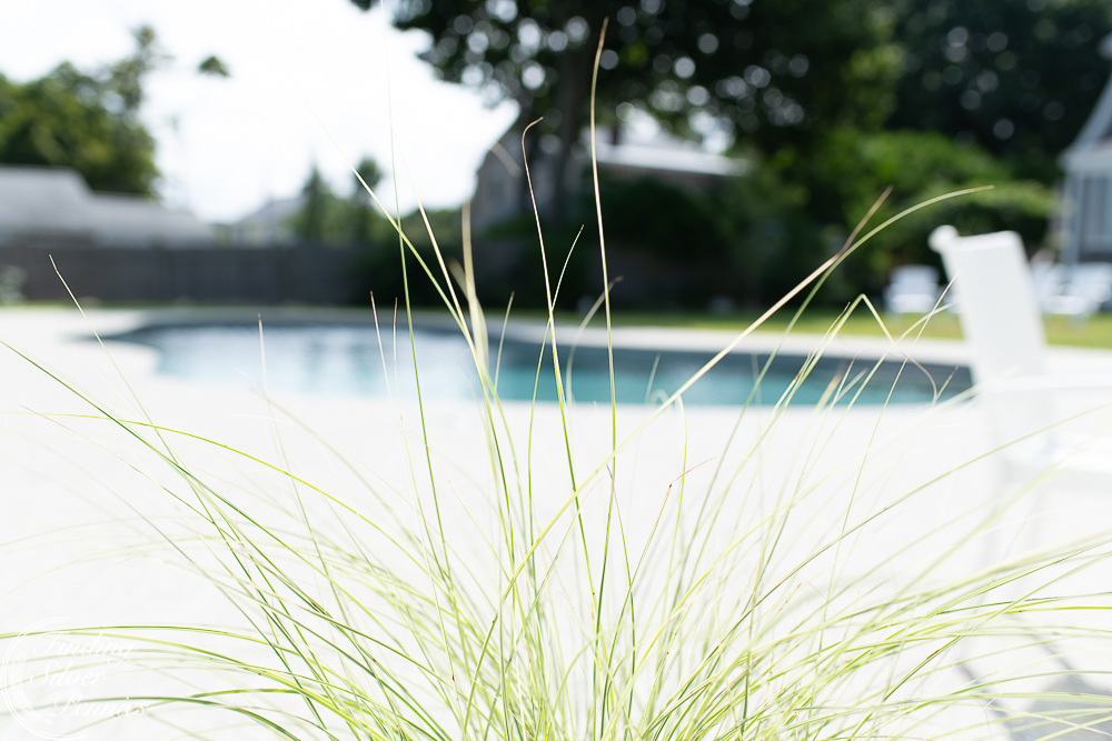 Ornamental grasses and a pool reveal - Finding Silver Pennies