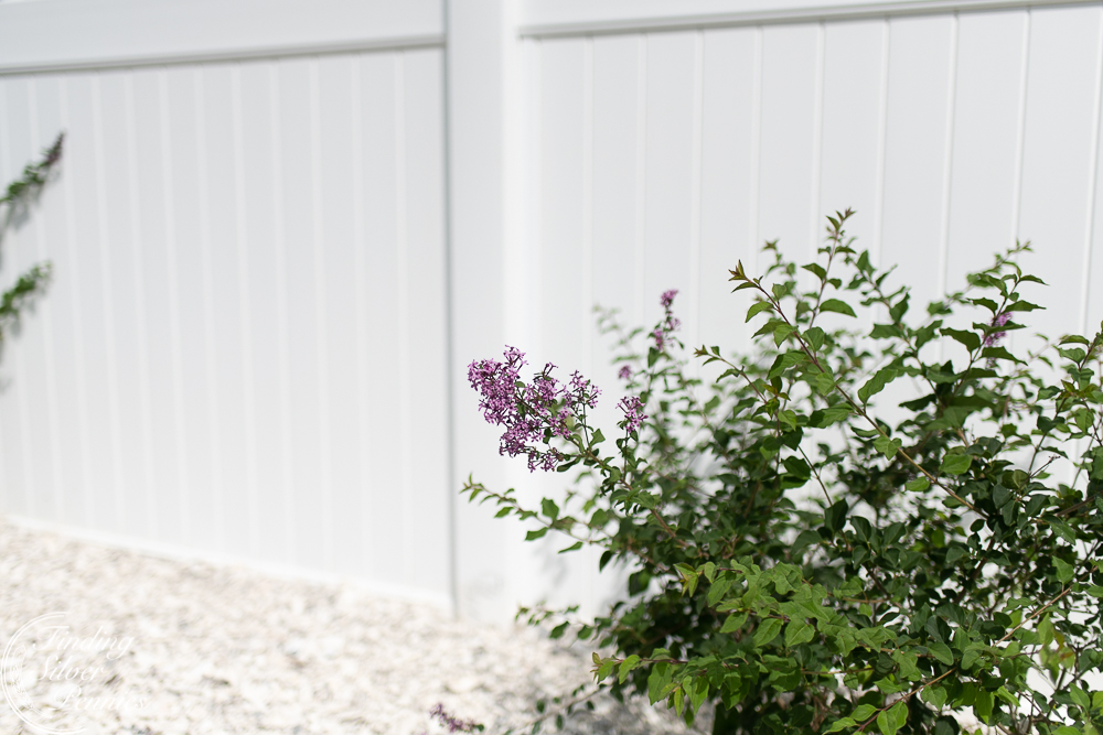 Lilacs and crushed shells - Finding Silver Pennies
