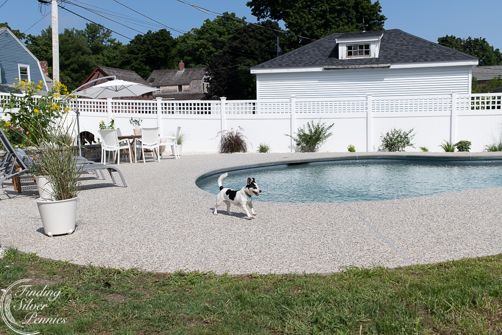 Rescue dogs frolicking in pool area - Finding Silver Pennies