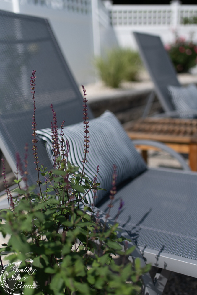 Pretty plants and wavy outdoor pillows - Finding Silver Pennies