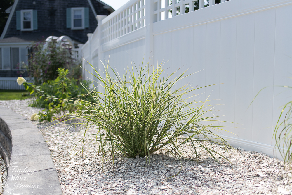Crushed shells, white fence and coastal planting - Finding Silver Pennies