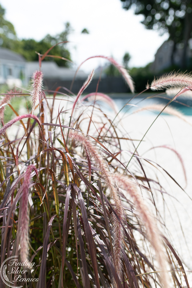 Ornamental sea grasses add a relaxed atmosphere to a coastal pool area - Finding Silver Pennies