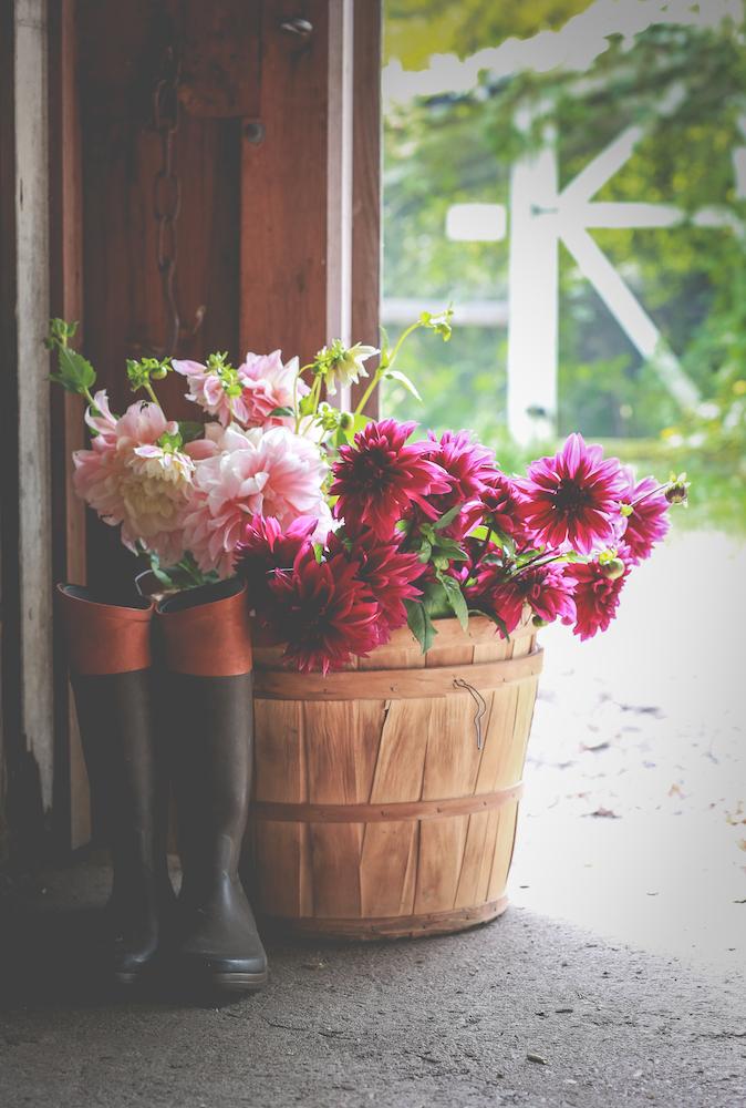 Beautiful blooms at Cross Street Flower Farm #interview #flowerfarm #creativity