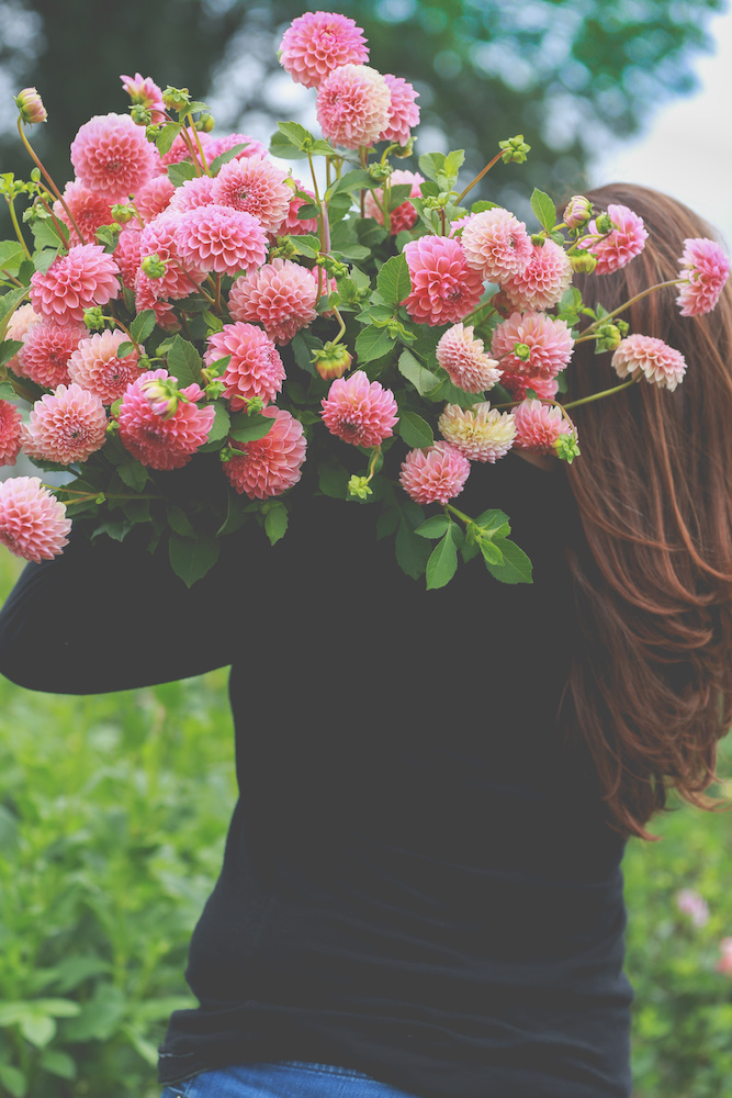 Lovely blooms at Cross Street Flower Farm #interview #flowerfarm #creativity