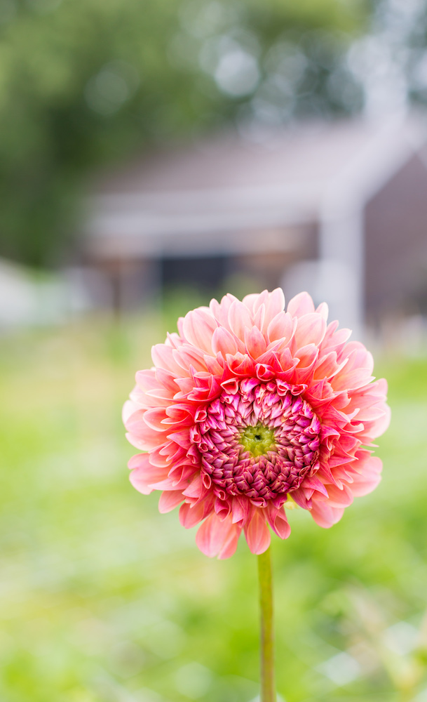 Gorgeous blooms and inspiration from Cross Street Flower Farm #interview #flowerfarm #creativity