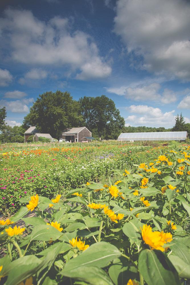 Tips on growing flowers #interview #flowerfarm #creativity